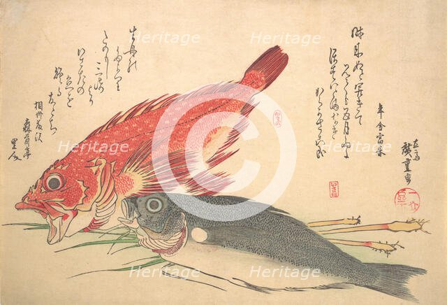 Isaki and Kasago Fish, from the series Uozukushi (Every Variety of Fish), 1830s., 1830s. Creator: Ando Hiroshige.