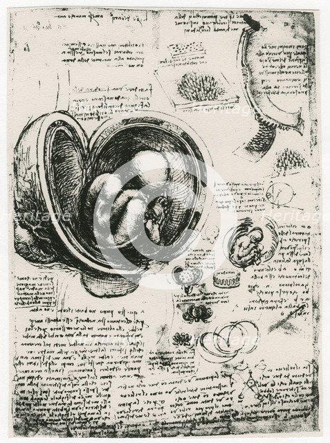 Anatomical sketch of a human foetus in the womb, c1510. Artist: Leonardo da Vinci