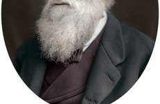 Thumbnail image of Charles Darwin, British naturalist, 1878. Artist: Unknown