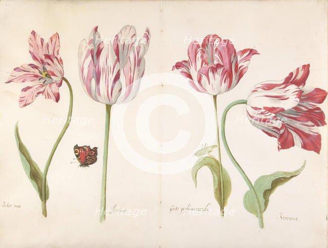 Four Tulips: Boter man (Butter Man), Joncker (Nobleman), Grote geplumaceerde..., ca. 1635-45. Creator: Jacob Marrel.