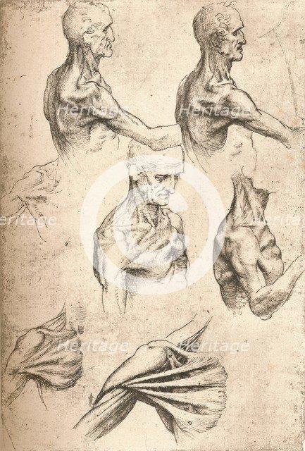 Anatomical drawing, c1472-c1519 (1883). Artist: Leonardo da Vinci.