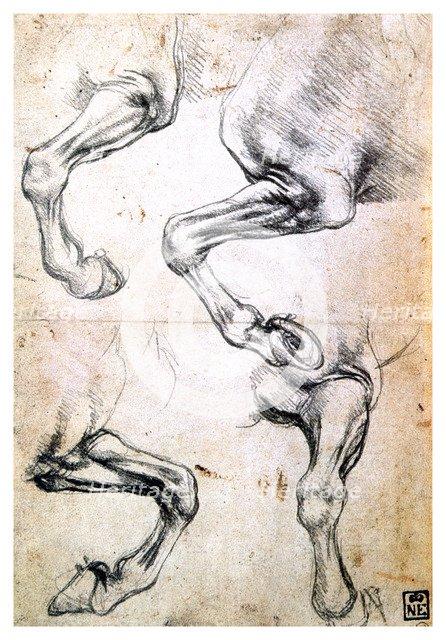 'Four studies of horses' legs', c1500. Artist: Leonardo da Vinci