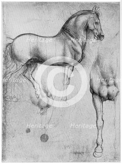 Studies of Horses, c1490 (1954). Artist: Leonardo da Vinci