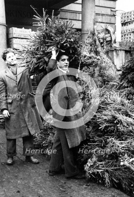 Man selling a Christmas tree, Covent Garden Market, London, 1952. Artist: Henry Grant
