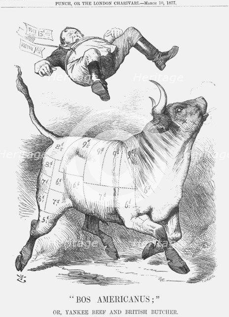Bos Americanus, 1877. Artist: Joseph Swain